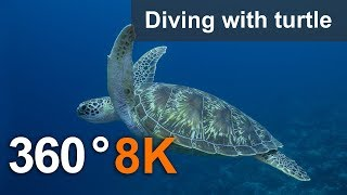 360°, Diving with turtle. 8K Underwater video
