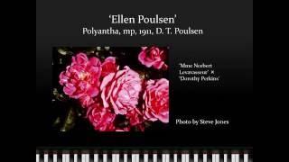 Polyantha Roses - Bob Martin - NCNH 2016 Rose Conference