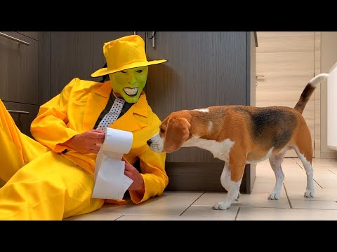 Dogs vs Yellow Clown Toilet Paper Prank : Funny Dogs Louie and Marie