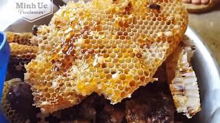 Cách lấy MẬT ONG trong vườn - Mật ong nuôi tự nhiên nguyên chất