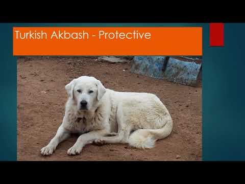 Top 10 Medium Size Guard Dogs