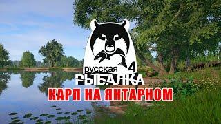 Ловим карпа на новом озере Янтарном Русская Рыбалка 4