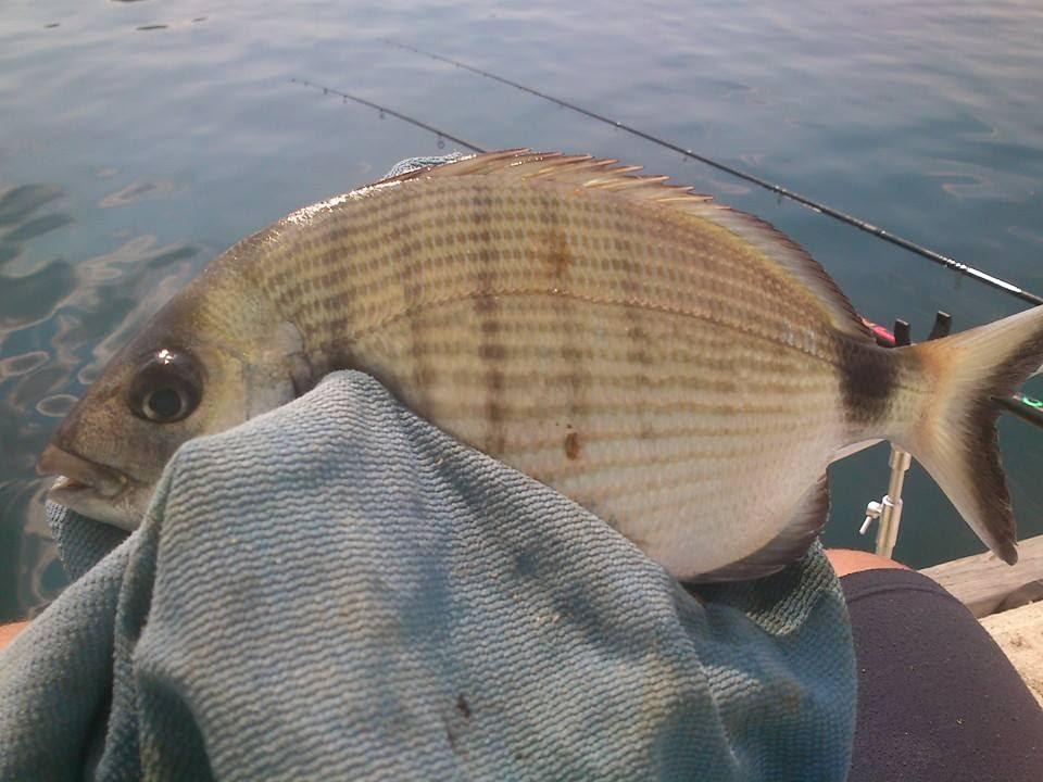 Match fishing in greece e 2 youtube for Elias v fishing