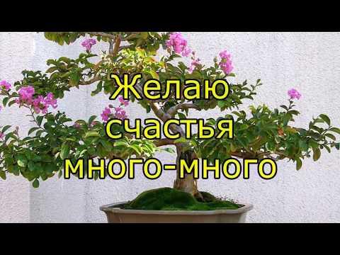 С праздником дорогие женщины!!! Красивое поздравление с Днем 8 марта, поздравление женщинам