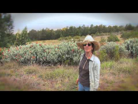 Farming with Lucia - Hunalani Farm Tour - Kula, Maui Hawaii