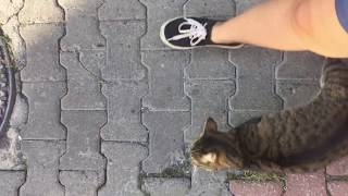 Grey And White Cat Meowing Unbelievably Cute - Cat Videos