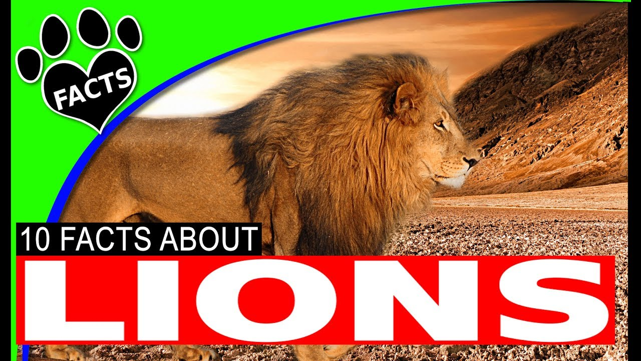10 Fun Facts About Lions