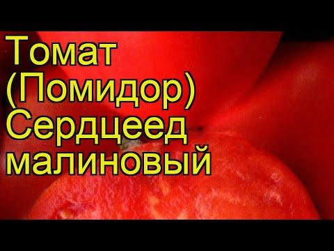 Томат обыкновенный Сердцеед малиновый. Краткий обзор, описание характеристик, где купить семена