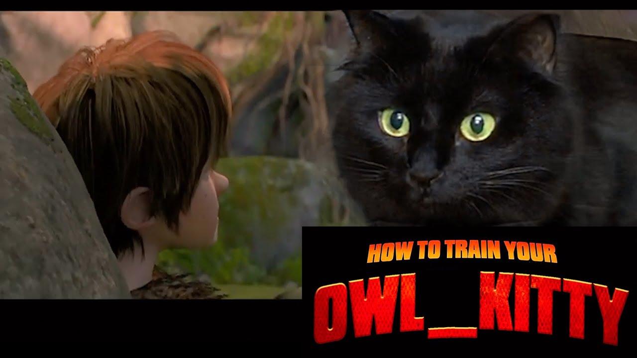 Owl kitty