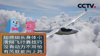 [智慧树]道哥和摩尔:滑翔机|CCTV少儿