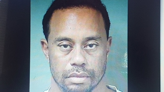 Tiger Woodz Arrested for DUI But Why?