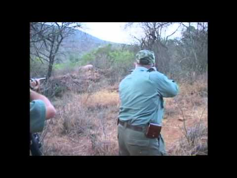 The Reality Of Canned Rhino Hunting   Video