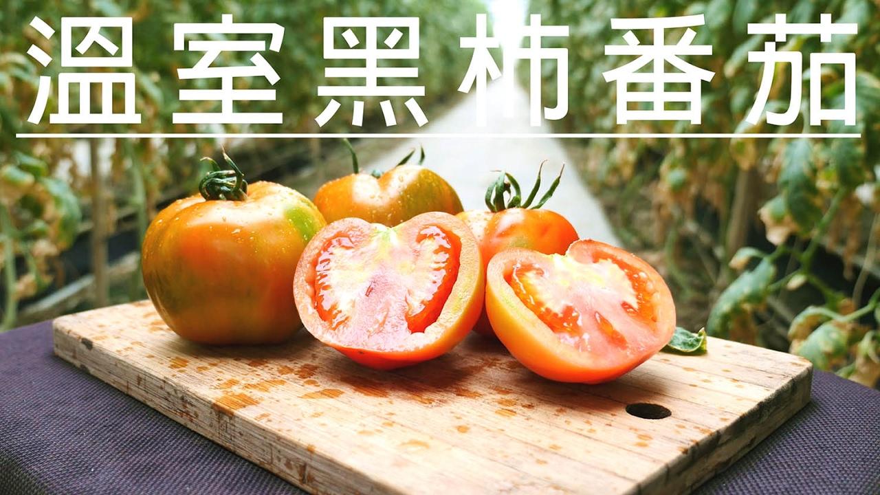 雲林大埤種植 古早味《黑柿番茄》季節限定 產地直送 - YouTube