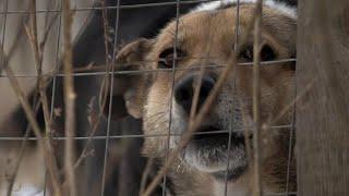 Участились случаи нападения бездомных собак на людей в Саратове и Башкирии.
