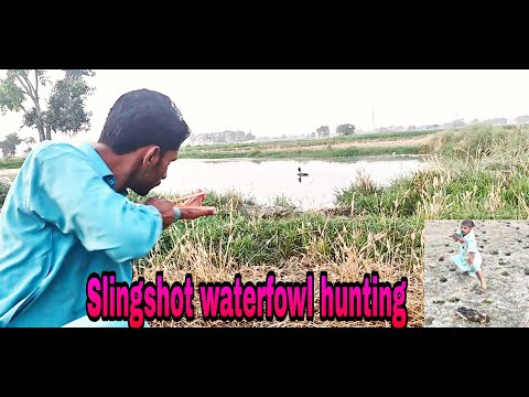 Migrated Duck Hunting with Slingshot!!!! waterfowl hunting in Pakistan