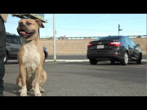SILVERSTATE LAS VEGAS - APBT/AMERICAN BULLY PET SHOP