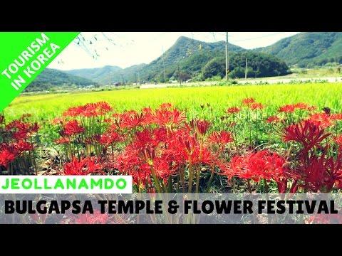 [TRAVEL JEOLLA] Bulgapsa Temple & Flower Festival (불갑사) - 영광