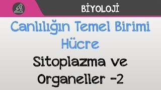 Canlılığın Temel Birimi Hücre - Sitoplazma ve Organeller -2