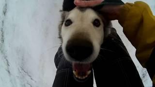 Я люблю собачек, а они любят меня=)))