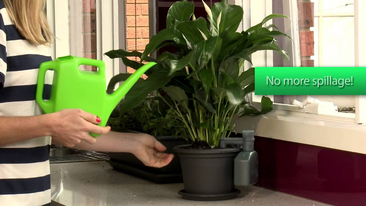 Amazon.com: Plant-A-Bottle (Set of 4 Indoor Plant Watering Devices ...
