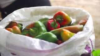 16ª Sepex - Alimentação Saudável