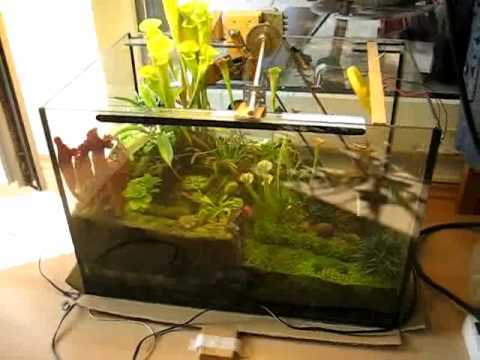 terrarium mit bewegung m rz 2010 youtube. Black Bedroom Furniture Sets. Home Design Ideas