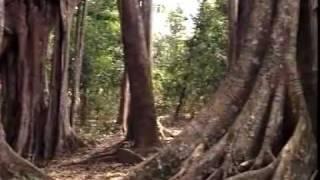 Gen Dequan - Dance of the Ethnic Yao People 哏德全 瑶族舞曲