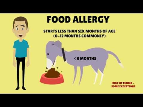 symptoms-of-food-allergy-in-dogs