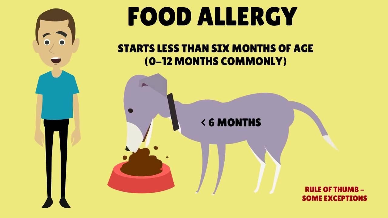 Dog Food Allergy Rash