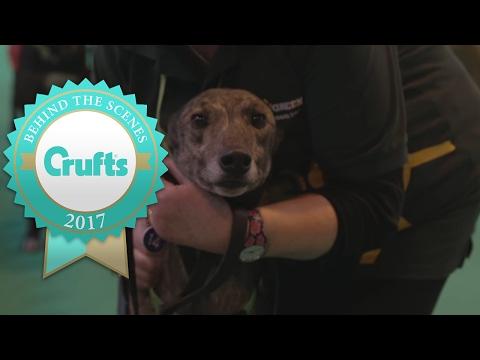 Retired Greyhound Trust at Crufts 2017