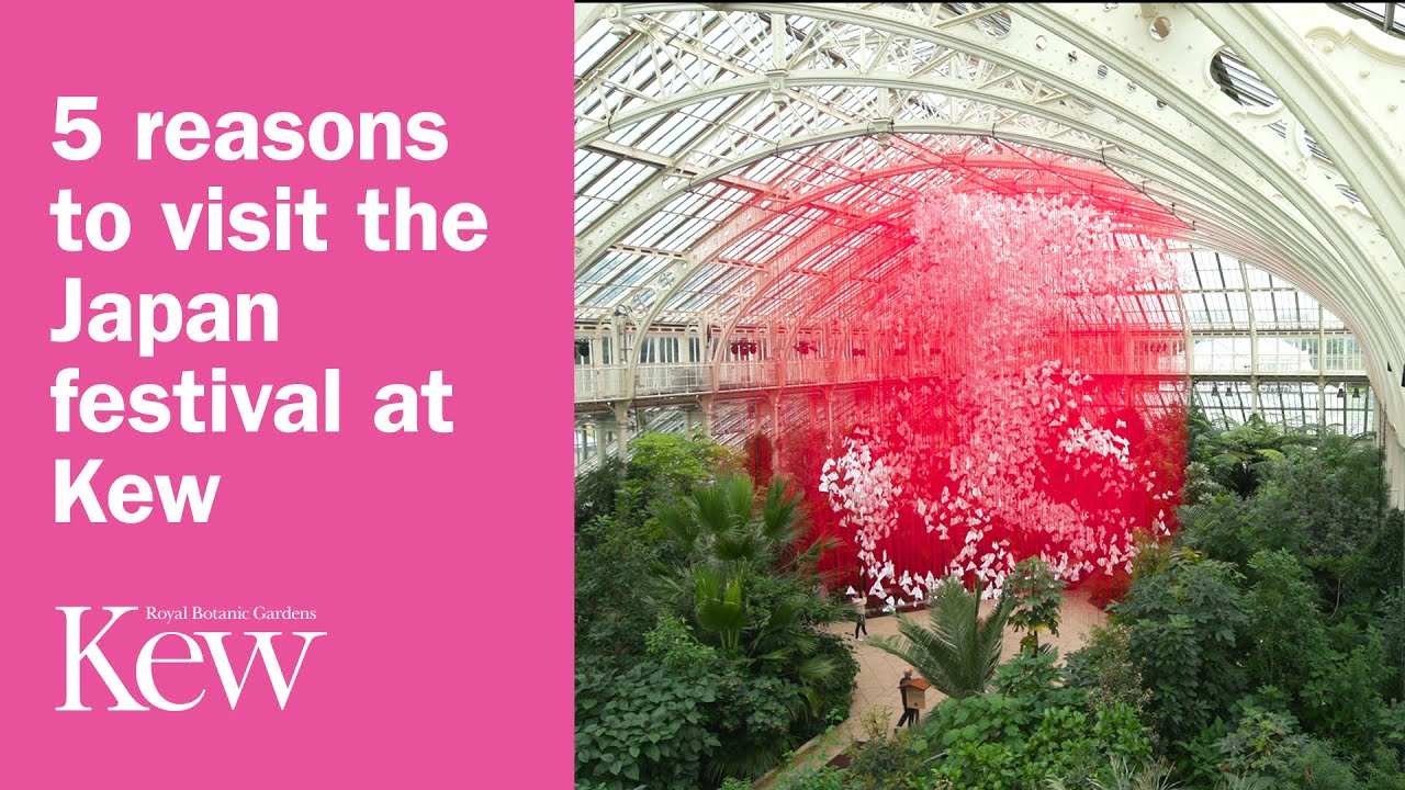 Download 5 reasons to visit the Japan festival at Kew