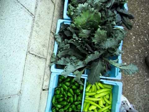 Harvest from Earthworks Organic farm