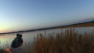 Охота на утку с МР 155 и коллиматор DOCTER®sight II. ( Утро )