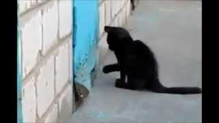 Hero Cat Saves Dog! oct 2012 A MUST TO SEE THIS ONE