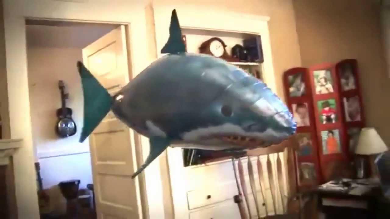Летающая рыба air swimmers fish great while shark: в наличии, с гарантией. Подробнее ▻ отзывы (4) — характеристики — фото — описание.