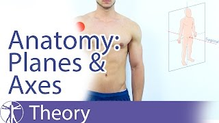 Anatomical Planes & Axes Explained