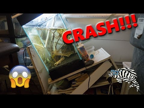Fish Tank Stand COLLAPSES!!!
