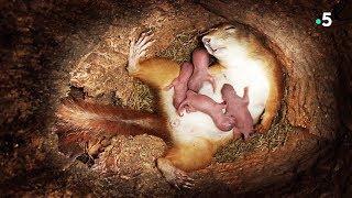 【ドキュメント】リスの赤ちゃん、誕生の瞬間