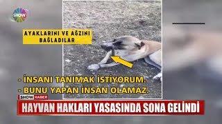 Hayvan hakları yasasında sona gelindi