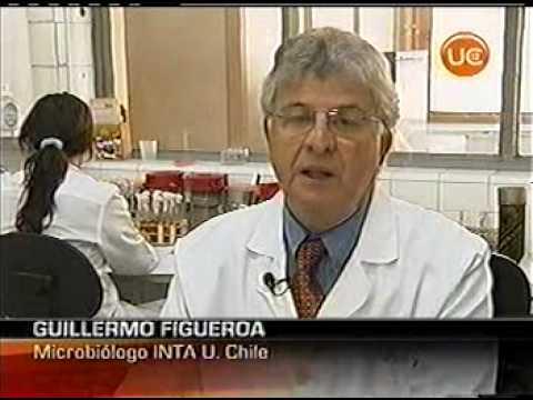 Cobre, Sus Propiedades Bactericidas Vía Canal 13 De Chile