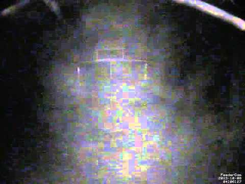 Feedercam Capture (2013-10-07)