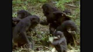 Out in Nature: Homosexual Behavior in the Animal Kingdom (2 of 6)