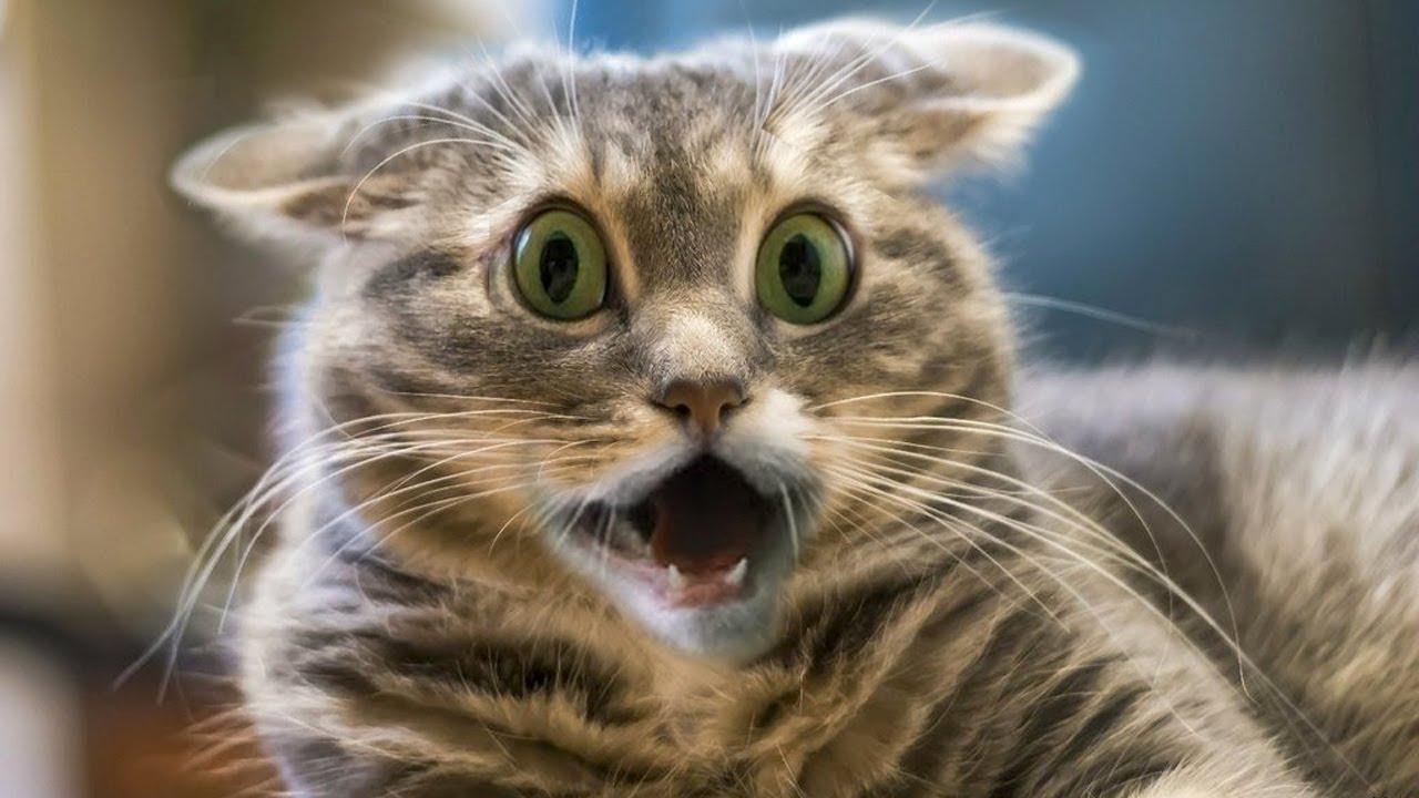 Прикольные, картинки по работе смешные с котиками