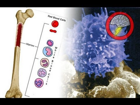 Missing Link In Immune System Development (Brainstorm Ep103)