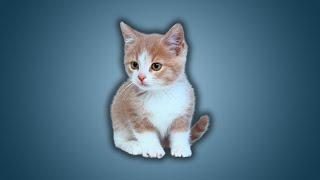 Pourquoi internet est le royaume des chats - Ep.08 - e-penser