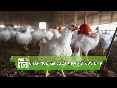 Chăn nuôi gà vượt khó thời Covid-19 | VTC16