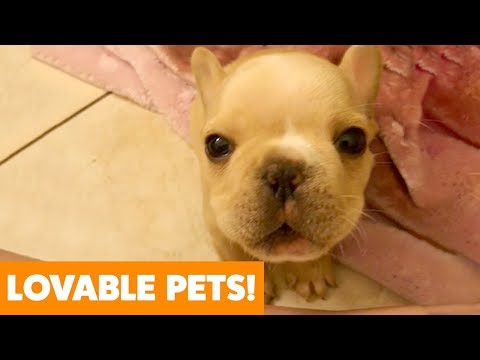 Most Adorable Dogs And Cats   Funny Pet Videos