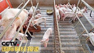 《国际财经报道》 20190904| CCTV财经