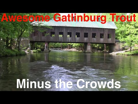 Awesome Trout Fishing Minutes From Gatlinburg Without The Crowds