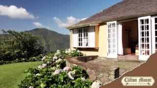 Jamaica Blue Mountain Coffee - Clifton Mount Estate
